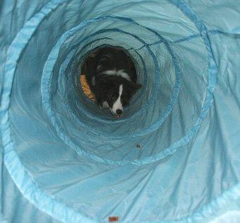 トンネルの中に入る犬