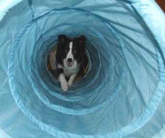 楽しそうにトンネルをくぐる犬