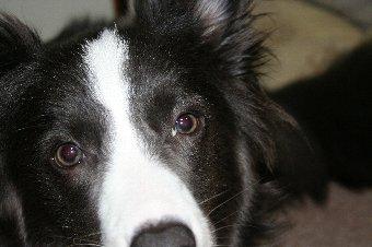 目やにが出た犬