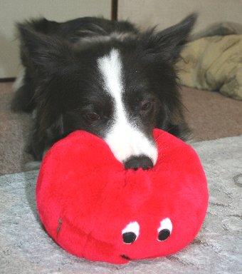 おもちゃにかぶり付く犬