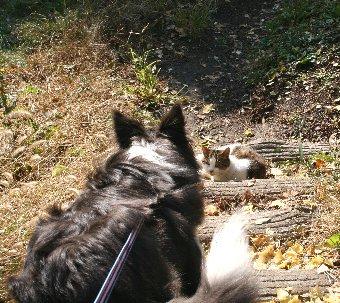 公園の中で猫に会った犬