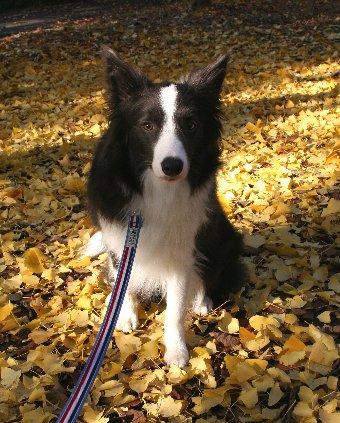 イチョウと記念撮影する犬