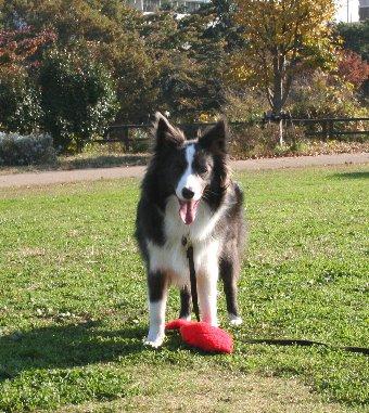 芝生の広場で遊ぶ犬