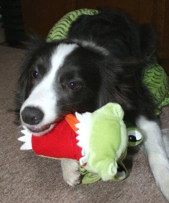 新しいおもちゃが気に入った犬