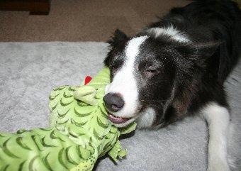 おもちゃを噛むのが好きな犬