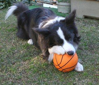 パンクしないボールと犬