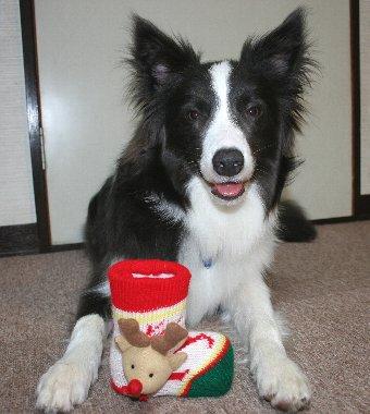 クリスマスブーツと犬