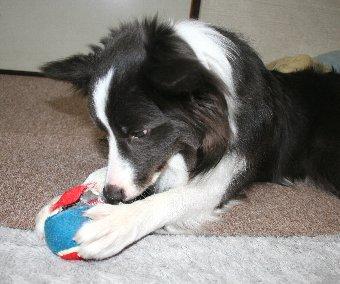 破壊する箇所を確認する犬