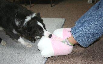 スリッパ型のおもちゃで遊ぶ犬