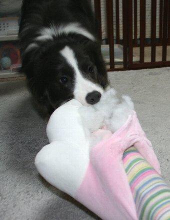 おもちゃを破壊した犬