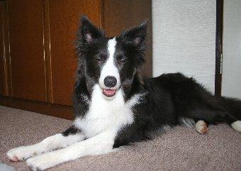 シャンプーできれいになった犬