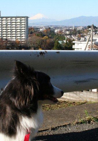 富士山と犬