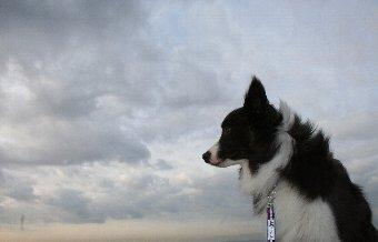 曇り空と犬の横顔