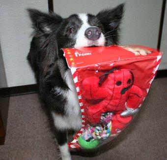 クリスマスプレゼントをもらった犬