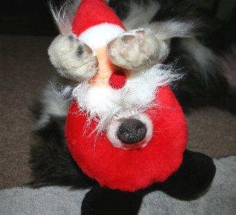 クリスマスプレゼントで遊ぶ犬