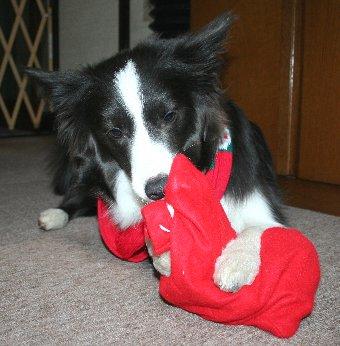 袋の中身を確認する犬