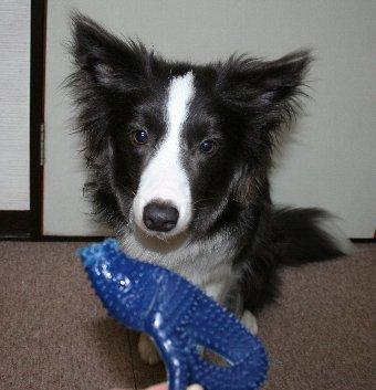 首がなくなってしまったおもちゃと犬