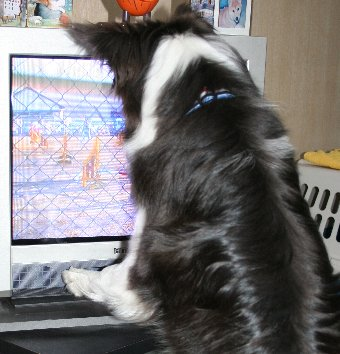 画面を凝視する犬