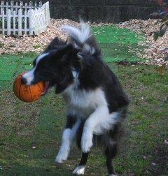 ボールを上手にキャッチした犬
