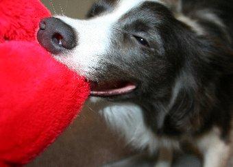 面白い顔で遊ぶ犬