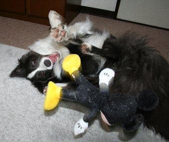 ひっくり返って遊ぶ犬