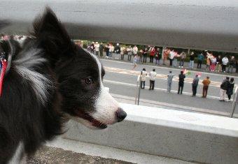 箱根駅伝のランナーと犬