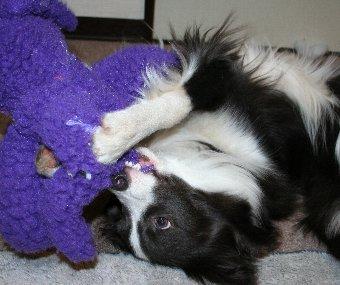 寝っ転がって遊ぶ犬