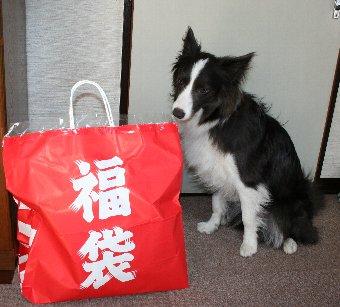 犬用の福袋を買ってもらった犬