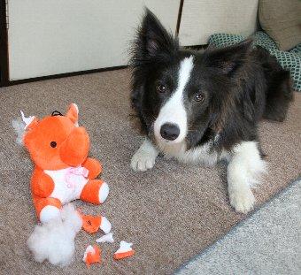 あっという間に破壊したおもちゃと犬