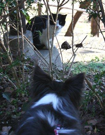 同じ柄の猫に会った犬