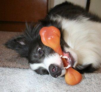 おもちゃをくわえて転がる犬