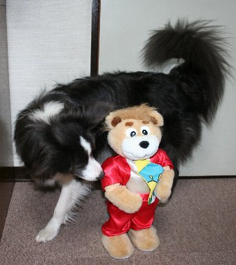 踊るくまのぬいぐるみと犬