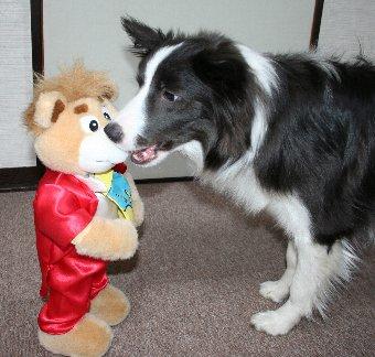 踊るぬいぐるみに警戒しながら近づく犬