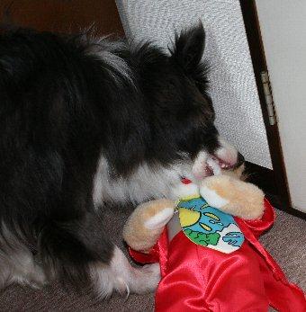 踊るぬいぐるみで遊ぶ犬