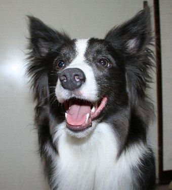 鼻の穴が大きい犬