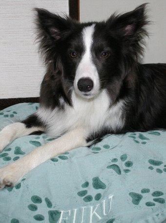 犬用のベッドをもらった犬