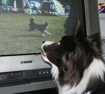 テレビ画面に映る自分を見る犬