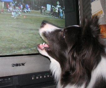 犬の映像に興奮する犬