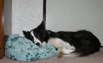 ベッドを枕にして寝る犬