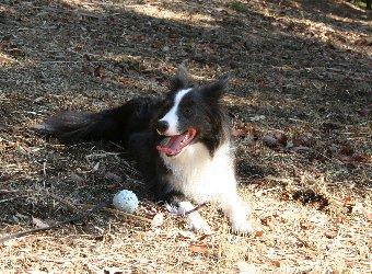 遊び疲れて休憩中の犬
