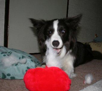 おもちゃを破壊し始める犬