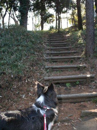 階段とボーダーコリー