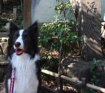 犬と等々力渓谷