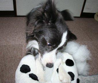 破壊活動に余念のない犬