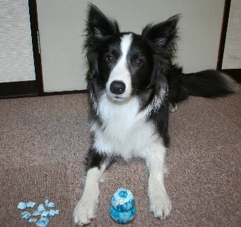 パピーコングを破壊した犬