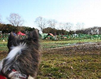 アジリティ大会を見学する犬