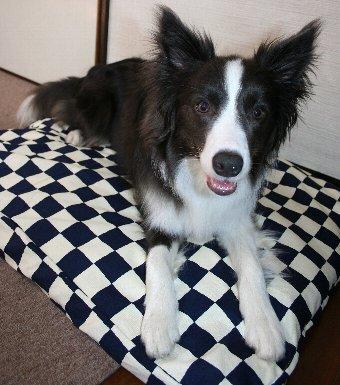 新しいベッドを買ってもらった犬