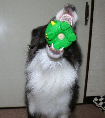 大口を開けておもちゃをキャッチする犬