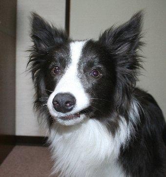 遊んでいたら変な顔になってしまった犬