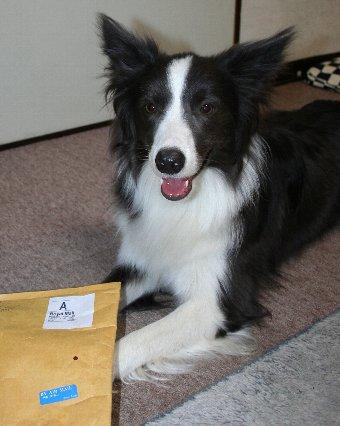 イギリスからの荷物と記念撮影する犬